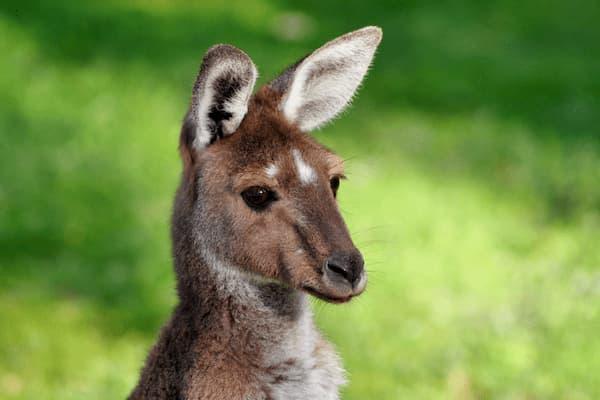 如果你想在澳洲注册公司,一定要看! — 洋易达